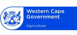 western cape government careers internships youth training jobs